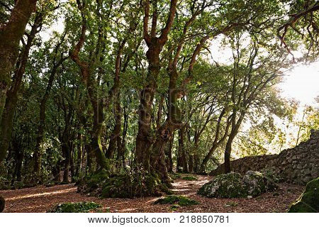 Monteluco, Spoleto, Umbria, Italy: park of the ancient sacred wood to Jupiter, a holm oak forest close to the sanctuary of Saint Francis on the hill near the town