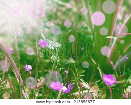 Butterfly in dreamland like happy fantasy for creative