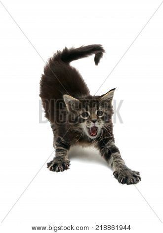 the kitten is stretching isolated on white background
