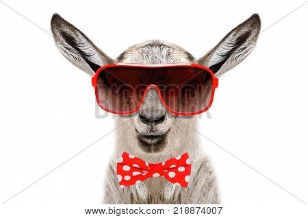 Portrait of funny goat in a glasses and bow tie, isolated on white background