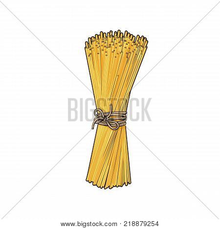 Bunch of spaghetti tied up with a rope, ribbon, Italian pasta, sketch style vector illustration on white background. Realistic hand drawing of spaghetti tied up with a rope, uncooked Italian pasta