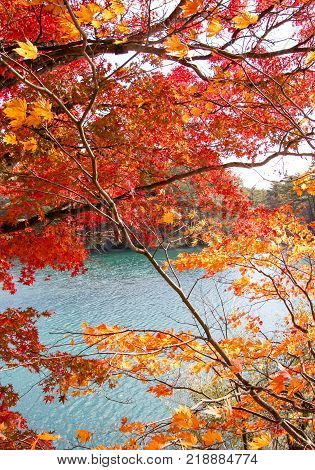 The landscape of colorful leaves at turquoise colored lakeside in autumn.