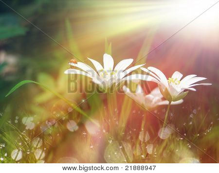 white tinny flower under the morning sunlight