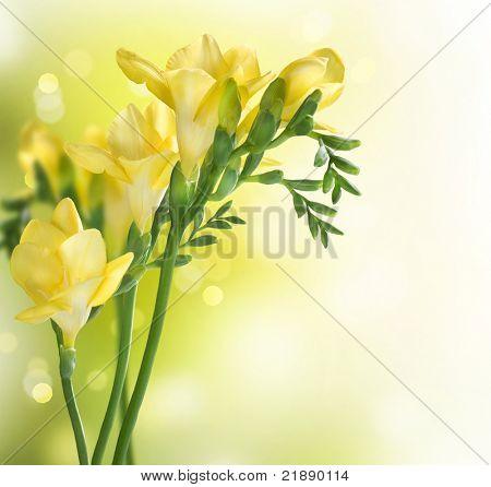 Diseño de frontera Fresia flores
