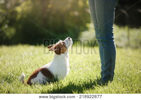 Girl Playing With A Dog. Jack Russell Terrier In Nature. Summer