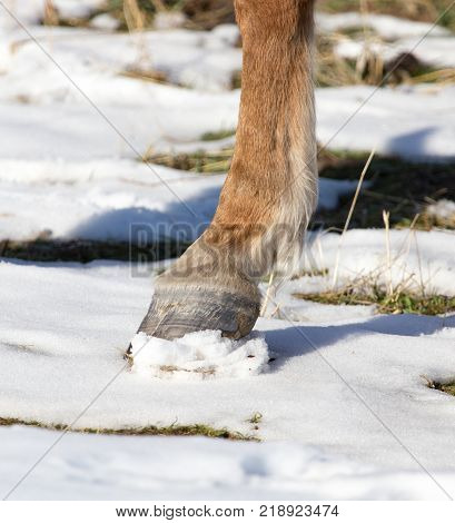 hoofs of horses in winter . In the park in nature