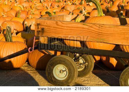 Pumpkins in den Warenkorb