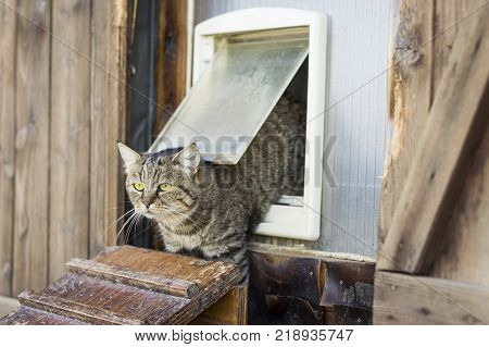 Cat escapes from a cat flap and goes outside