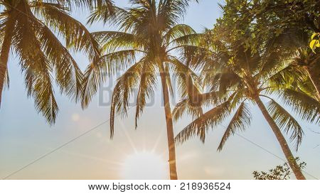 Beautiful tropical sunrise with palm trees at beach