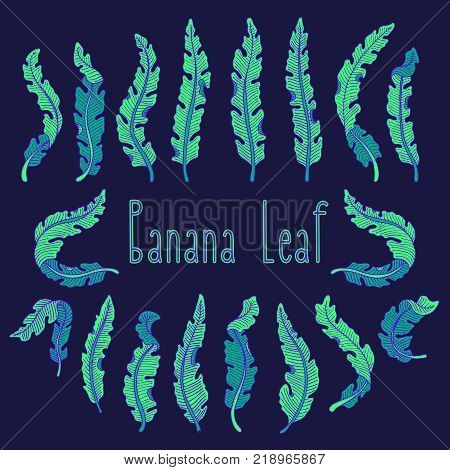 Hand Drawn Tropical Leaf Set With Green Banana Leaves On Dark Background. Hand Drawn Jungle Illustra