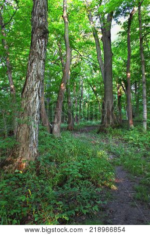 Beautiful woodland at Shabbona Lake State Park in northern Illinois.