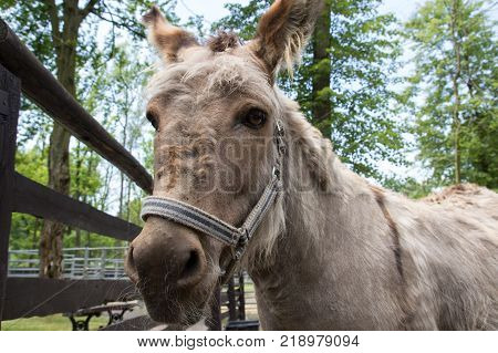 Donkey looking at the camera, cute funny photo