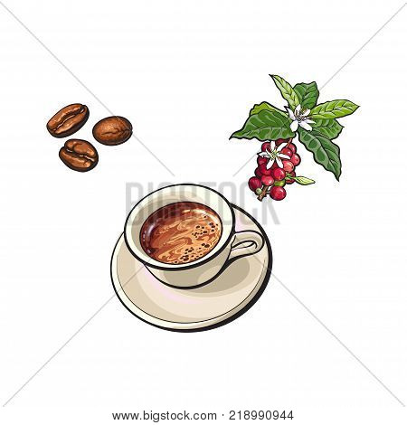 vector sketch hand drawn fried black coffee beans, coffee tree branch with berries, leaves and flowers and ceramic cup of hot coffee. Isolated illustration on a white background.
