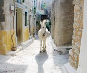 A (backlit) donkey in a narrow alley of a village in the Greek island of Chios poster