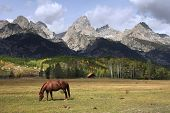 Horse grazes on grass in a pasture below the Grand Teton mountain range in Wyoming poster