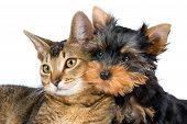 The puppy and kitten in studio on a neutral background poster