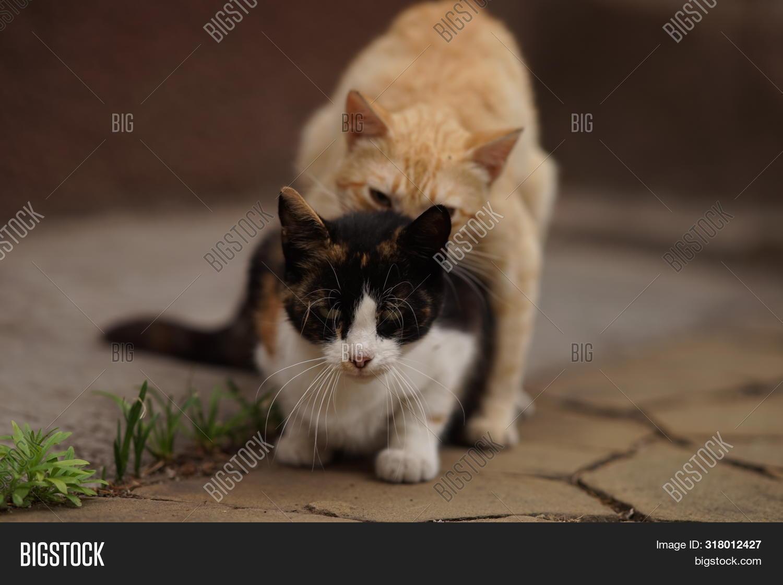 секс ласки для кошки