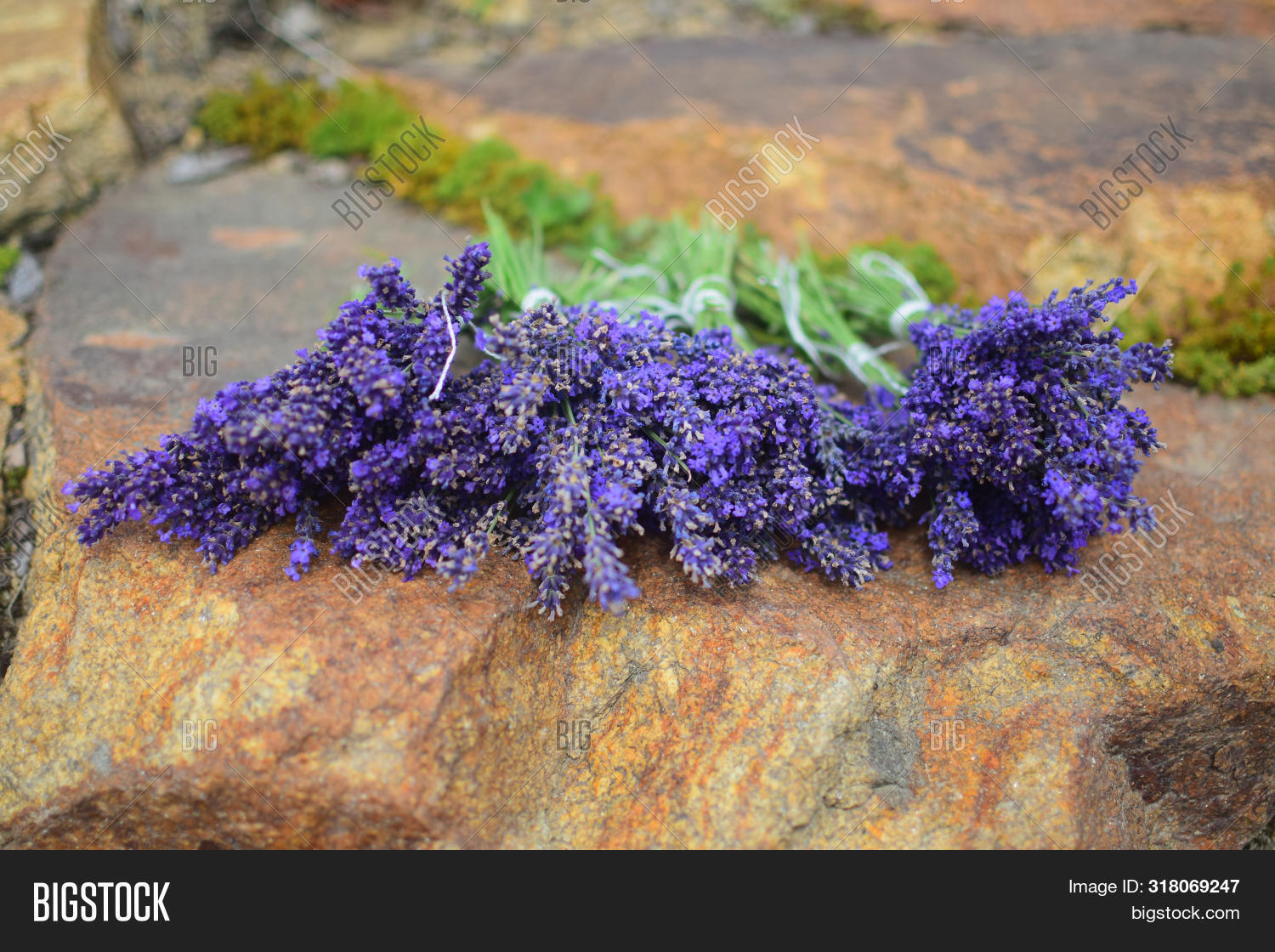 Lavender Flowers Image Photo Free Trial Bigstock