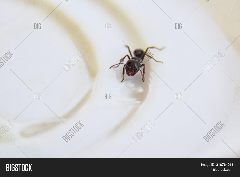 Ants Kitchen. Black Image & Photo (Free Trial) | Bigstock