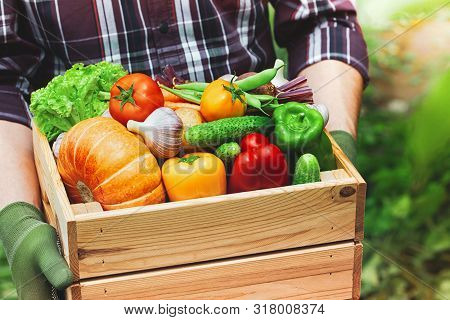 Farmer Holds In Hands Wooden Box With Autumn Crop Of Organic Vegetables And Roots Against Backyard B