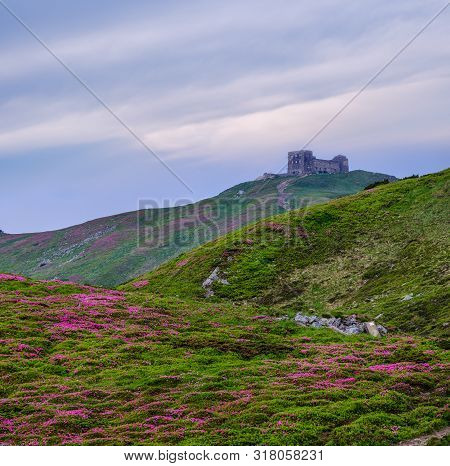 Massif Of Pip Ivan Mountain With The Ruins Of The Observatory On Top. Pink Rhododendron Flowers On S