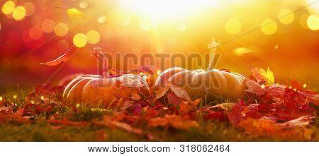 AutumnThanksgiving Day Background. Halloween Pumpkins. Harvest