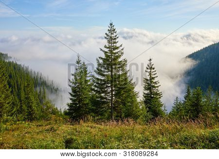 Firtrees on glade in mountains above haze and white clouds. Morning sunrise in Ukrainian carpathians. Blue sky and fresh air among picturesque nature panorama.