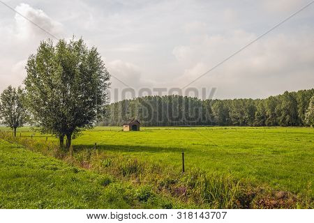 Dutch Polder Landscape With Grassland And Two Trees In The Foreground. The Meadow Is Secured With El