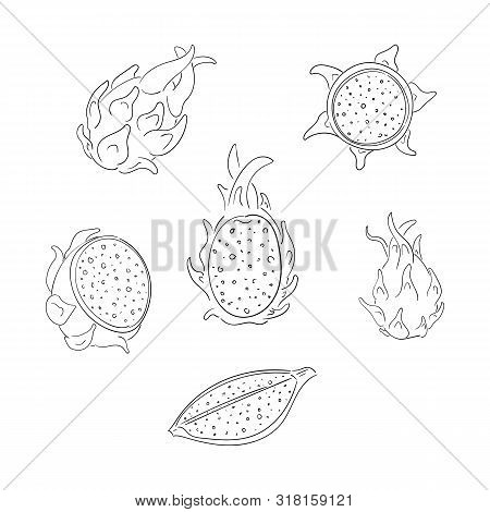 Dragon Fruits Whole And Sliced Outline Illustrations Set