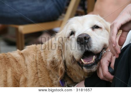 Lovely Dog With Hands