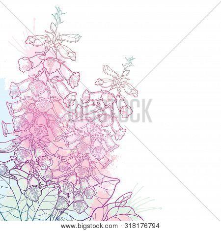 Vector Corner Bouquet Of Outline Toxic Digitalis Purpurea Or Foxglove Flower Bunch With Bud And Leav