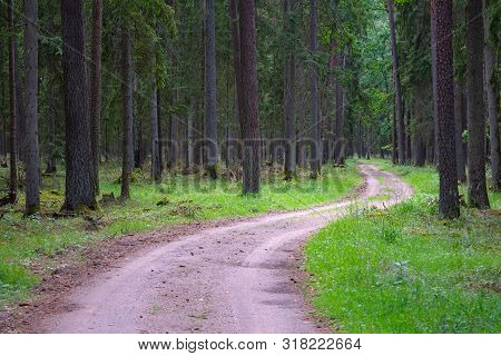 Gravel And Sand Road In The Pine Forest. Diminishing Perspective Of The Path In The Woods. Walking O