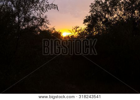 Thickets In The Wild At Sunset. Darkness In The Forest. Sunset In Impassable Forest