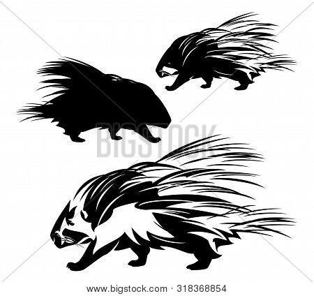 Cute Wild Porcupine Walking - Side View Animal Black And White Vector Outline And Silhouette Design