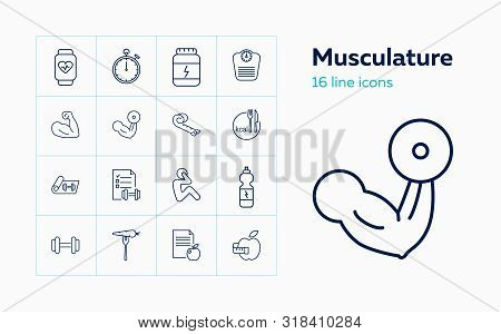 Musculature Icons. Set Of Line Icons. Bodybuilding, Dieting, Sport Nutrition. Fitness Concept. Vecto