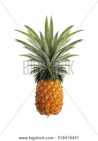 Pineapple Isolated On The White Background. Contains Proteolytic Enzymes, Bromelain Names, Helps Dig