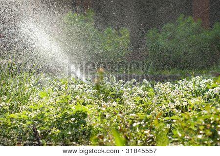 garden watering, huge amount of water drops