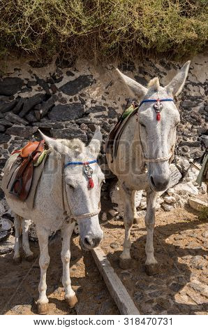 Donkey And Mule Path In Thira, Santorini, Greece