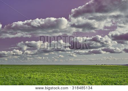 Fresh and beautiful Summer Landscape - purple sky and green grass. Field, sky and puffy clouds. Samara, Russia poster
