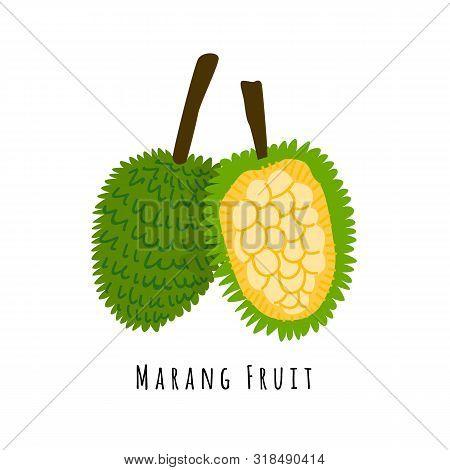 Marang Or Bread Fruit Flat Vector Illustration. Cartoon Slices Of Exotic, Tropical Fresh Fruit. Clip