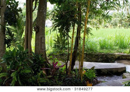 small portion of a small tropical garden