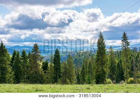 Beautiful Alpine Landscape In September. Spruce Trees On The Edge Of A Grassy Meadow. Windy Weather