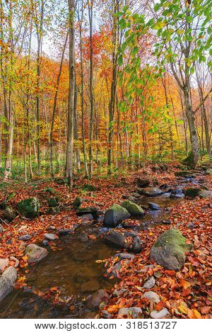 Small Water Stream In Forest. Beautiful Autumn Nature Scenery. Ground Covered With Fallen Red Foliag