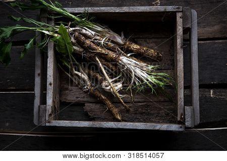 Horse Radish . Fresh Horseradish Roots On Wooden Table.
