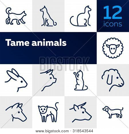 Tame animals line icon set. Set of line icons on white background. Beef, horse, cat. Household concept. Vector illustration can be used for topics like household, nature, farm poster