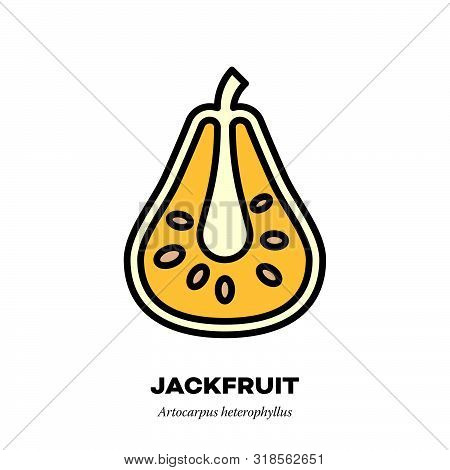 Jackfruit Icon, Outline With Color Fill Style Vector Illustration, Cross-section