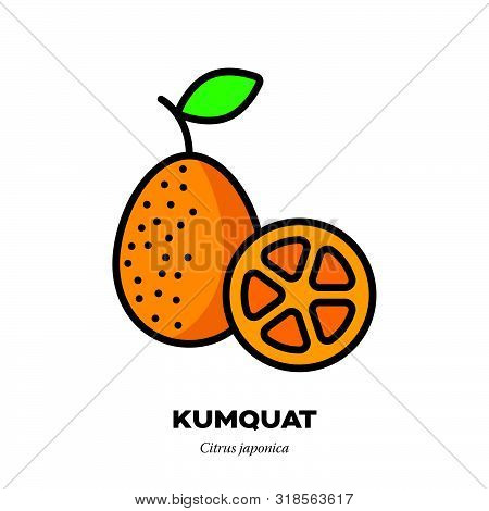 Kumquat Fruit Icon, Outline With Color Fill Style Vector Illustration, Half And Whole Fruit With Lea