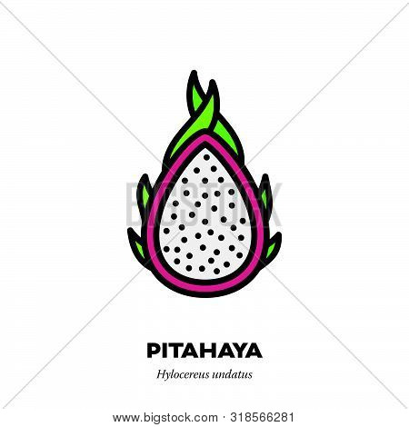 Pitahaya Or Dragon Fruit Icon, Outline With Color Fill Style Vector Illustration, Fcross-section