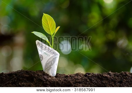 Banknotes Tree Image Of Bank Note With Plant Growing On Top For Business Green Natural Background Mo