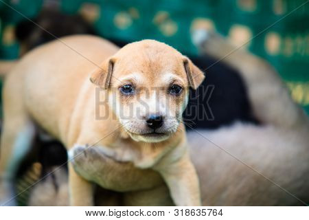 Many Cute Puppies In The Basket, Puppies Look At The Camera,puppy Sleeping On A Blanket ,cute Dogs A